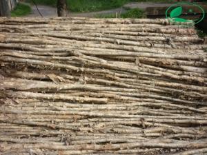 Cừ tràm gốc 3 - 5cm, dài 4 - 4,5 mét